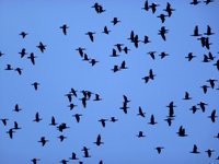 Migrating Birds over the Lagoon - Welcome to Batticaloa