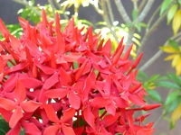 Abundance of flowers - Welcome to Batticaloa