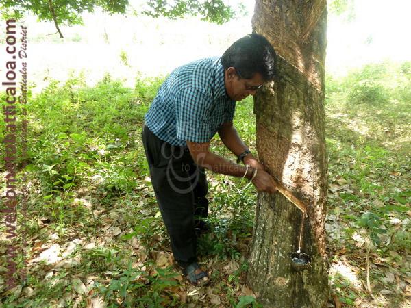 Amara Tours 20 - Sri Lanka - Chauffeur Guide Lecturer