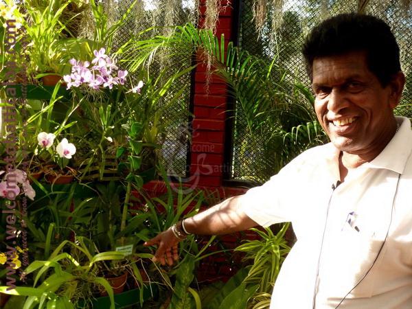 Amara Tours 22 - Sri Lanka - Chauffeur Guide Lecturer