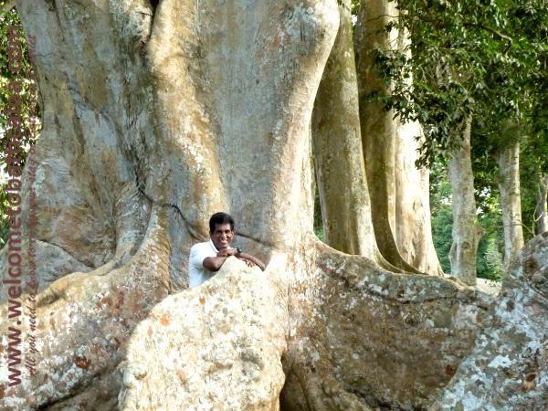 Amara Tours 24 - Sri Lanka - Chauffeur Guide Lecturer