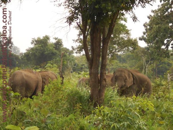 Amara Tours 28 - Sri Lanka - Chauffeur Guide Lecturer
