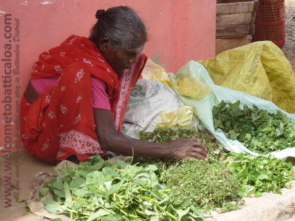 Batticaloa Market 11 - Visits & Activities - Welcome to Batticaloa