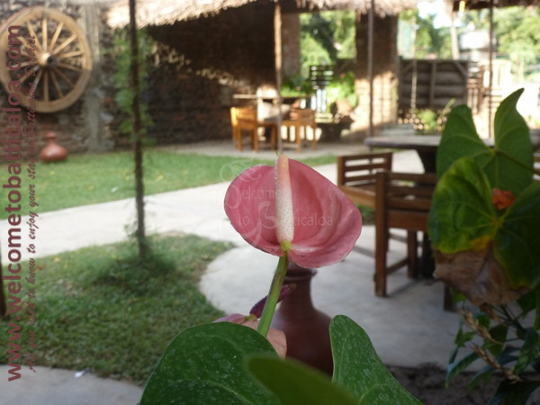 Cafe Chill 07 - Batticaloa Cafe - Welcome to Batticaloa