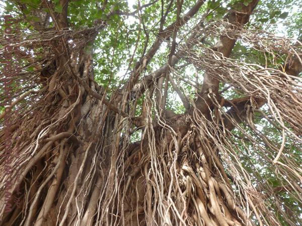 Koddamunai 24 - Visits & Activities - Welcome to Batticaloa