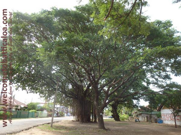 Koddamunai 25 - Visits & Activities - Welcome to Batticaloa
