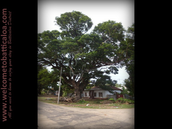 Koddamunai 26 - Visits & Activities - Welcome to Batticaloa
