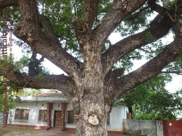 Koddamunai 27 - Visits & Activities - Welcome to Batticaloa