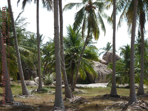 Passikudah & Kalkudah Beaches 23 - Visits & Activities - Welcome to Batticaloa