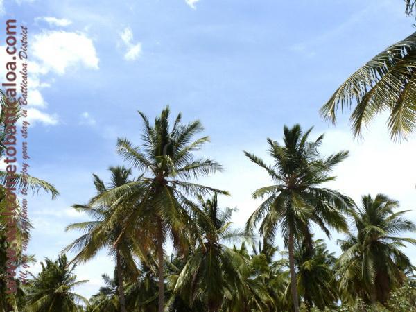 Passikudah & Kalkudah Beaches 24 - Visits & Activities - Welcome to Batticaloa