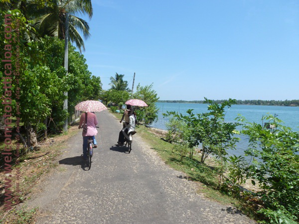 Sinna Uppodai Lagoon 04 - Visits & Activities - Welcome to Batticaloa