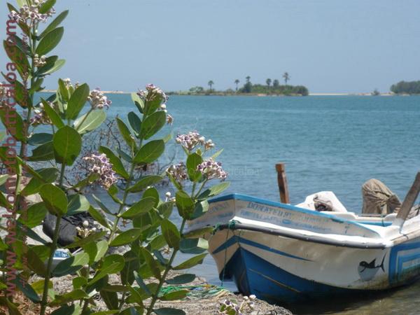 Sinna Uppodai Lagoon 12 - Visits & Activities - Welcome to Batticaloa