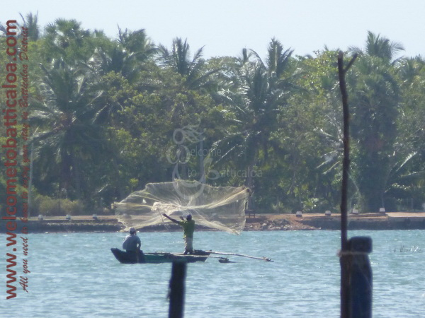 Sinna Uppodai Lagoon 19 - Visits & Activities - Welcome to Batticaloa
