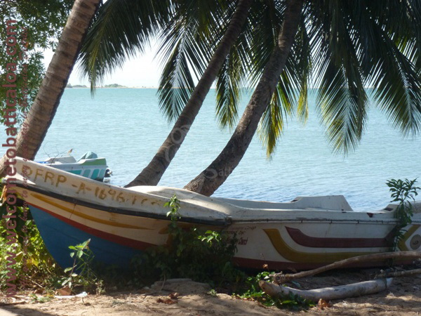 Sinna Uppodai Lagoon 27 - Visits & Activities - Welcome to Batticaloa