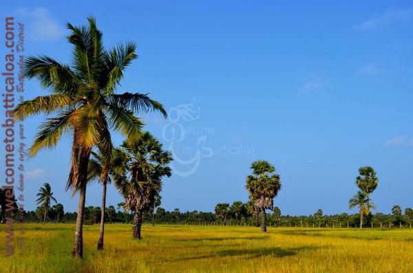 Victoria Guesthouse 02 - Passikudah Kalkudah Guesthouse  - Welcome to Batticaloa