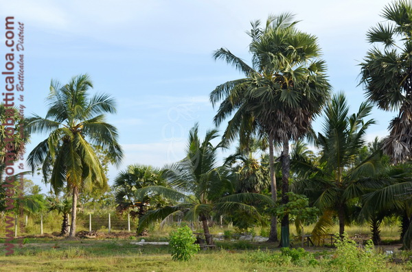 Eco Paradise Resorts - Passikudah - Welcome to Batticaloa - 18