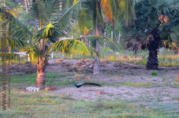 Eco Paradise Resorts - Passikudah - Welcome to Batticaloa - 27