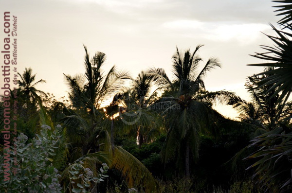 Eco Paradise Resorts - Passikudah - Welcome to Batticaloa - 28