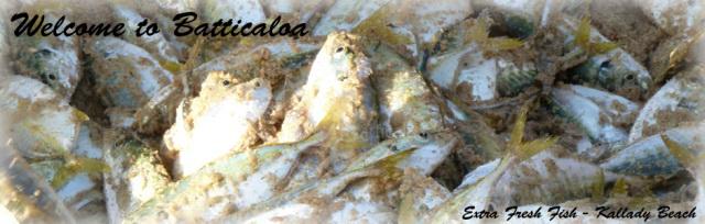7 - Extra fresh fish