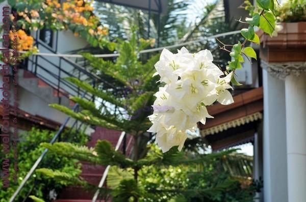 15 - Nirma Shadow Inn - Passikudah Guesthouse